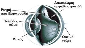 tmima-amfivlistroeidous